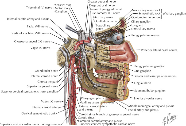 Middle Cervical Ganglion An Overview Sciencedirect Topics