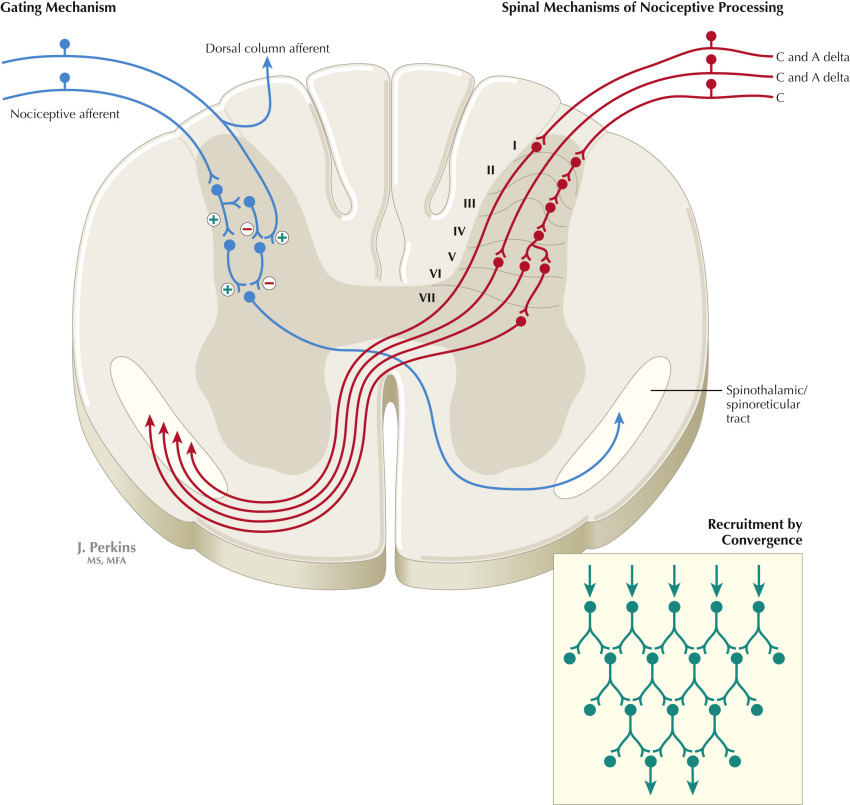 nociceptors initiate the sensation of