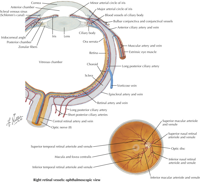 Central Retinal Artery An Overview Sciencedirect Topics
