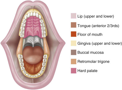 buccal mucosa an overview sciencedirect topics normal gastric mucosa diagram lip mucosa #2