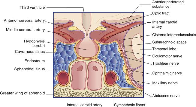 Cavernous Sinus An Overview Sciencedirect Topics