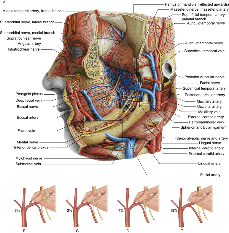 Maxillary Artery An Overview Sciencedirect Topics