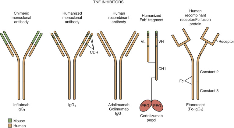 Infliximab - an overview | ScienceDirect Topics