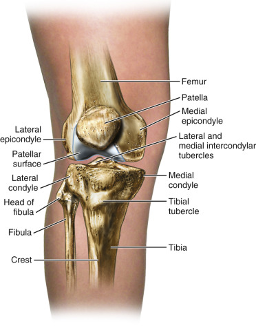 Patella An Overview Sciencedirect Topics