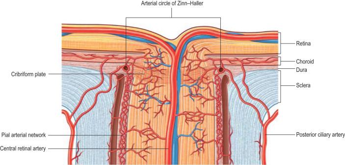 prostata nodulare dura