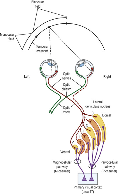 Retrochiasmal Disorders - ScienceDirect