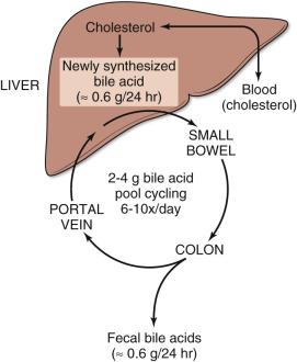 Bile Salt - an overview   ScienceDirect Topics