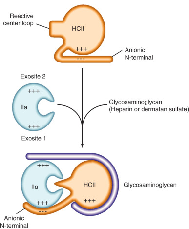 heparin an overview sciencedirect topics