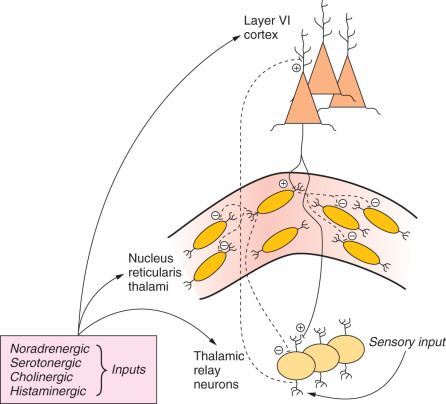 Spike Potential - an overview | ScienceDirect Topics