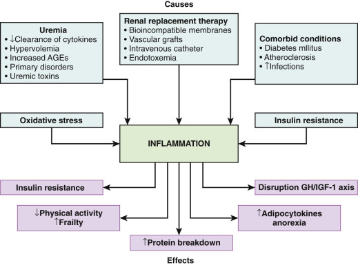 How Severe Maternal Inflammation Can >> Systemic Inflammation An Overview Sciencedirect Topics