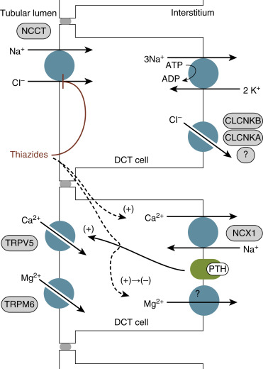 what is thiazide diuretics