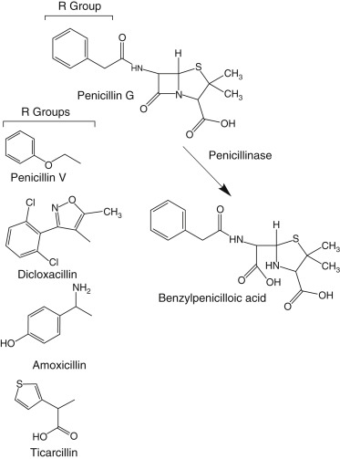 Extended-Spectrum Penicillin - an overview | ScienceDirect