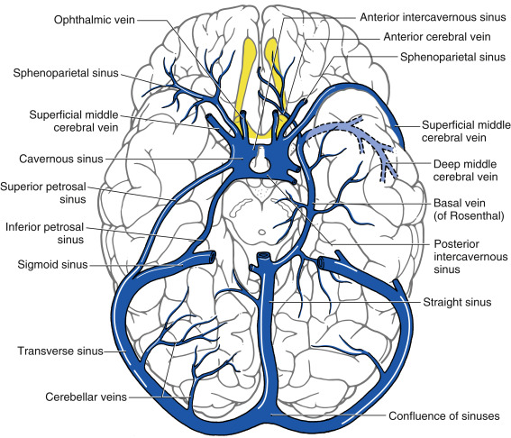 Great Cerebral Vein - an overview | ScienceDirect Topics