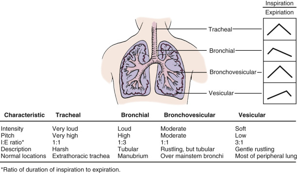 Lung Auscultation - an overview | ScienceDirect Topics