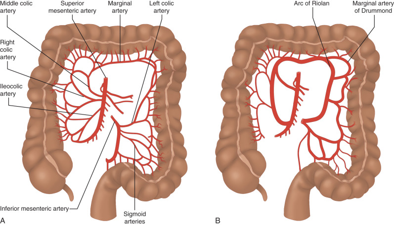 Options for Esophageal Replacement - ScienceDirect