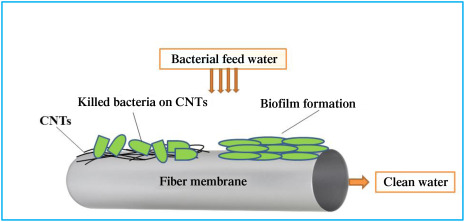 Biofilm Formation - an overview | ScienceDirect Topics