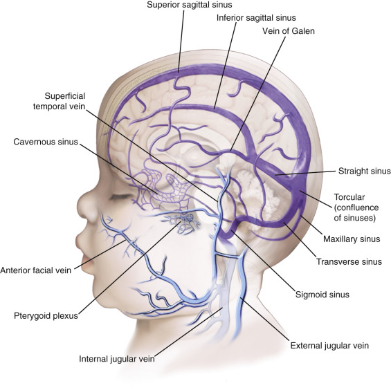 Great Cerebral Vein An Overview Sciencedirect Topics