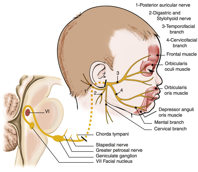 Injuries Of Extracranial Cranial Intracranial Spinal Cord And