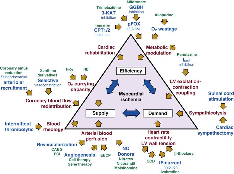 Angina Pectoris - an overview   ScienceDirect Topics