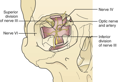 Orbit Fracture - an overview