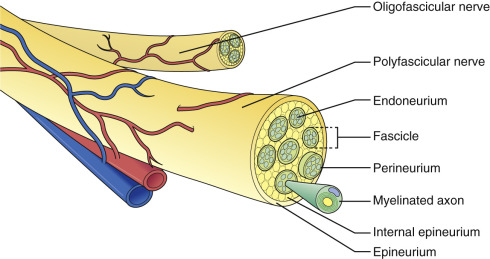 Management Of Peripheral Nerve Injuries Sciencedirect