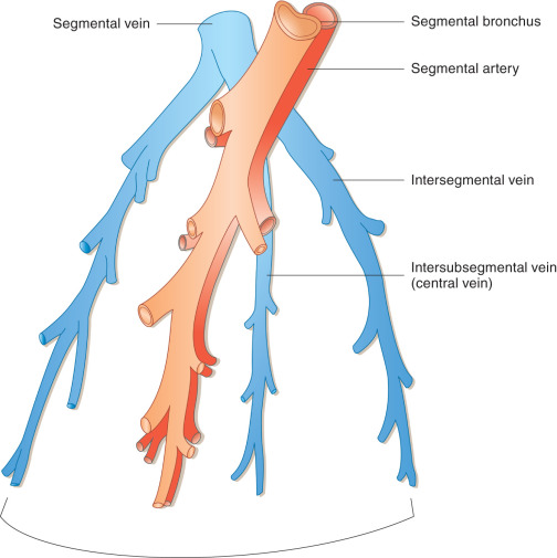 Lung Anatomy Sciencedirect