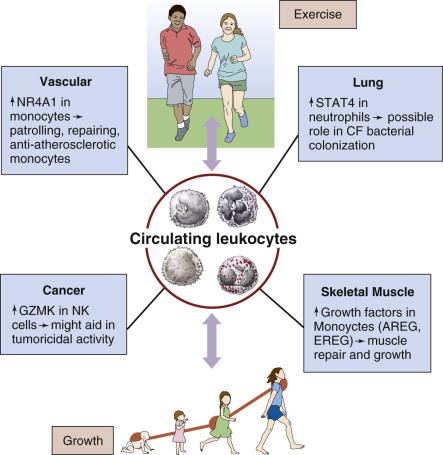 Exercise and Lung Function in Child Health and Disease