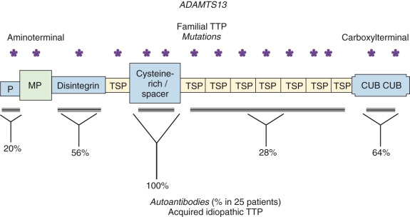 Thrombotic Thrombocytopenic Purpura and Related Thrombotic