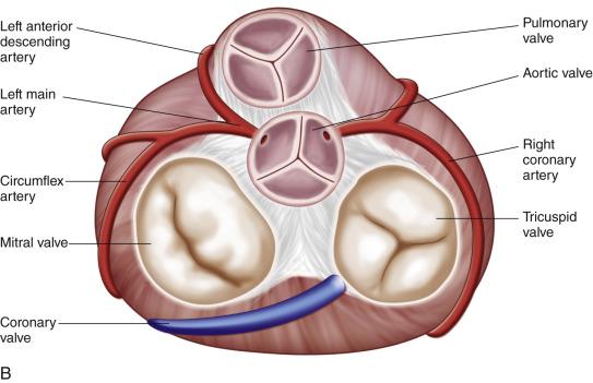 tricuspid valve diagram