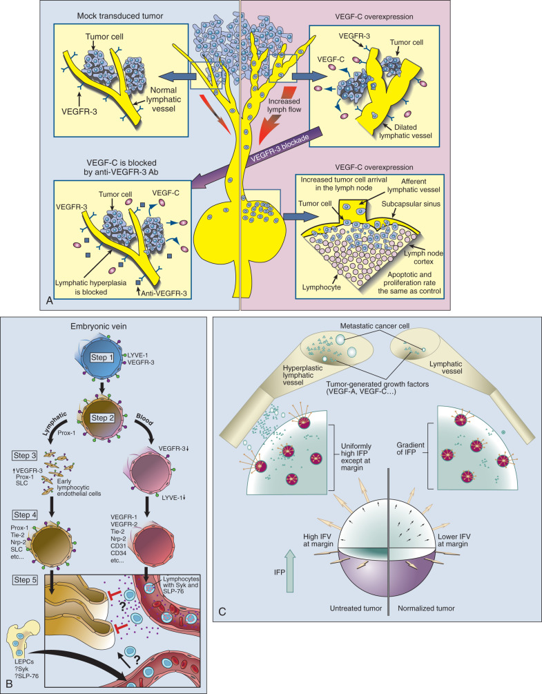 Tumor Microenvironment: Vascular and Extravascular Compartment