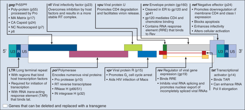 Gene Therapy in Oncology - ScienceDirect