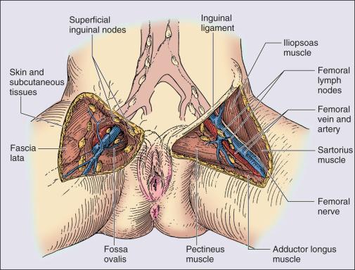 Infectia cu virusul papiloma uman (HPV) | primariacetateni.ro