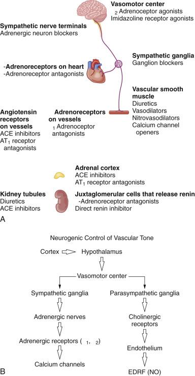 Vasodilatador antihipertensivo