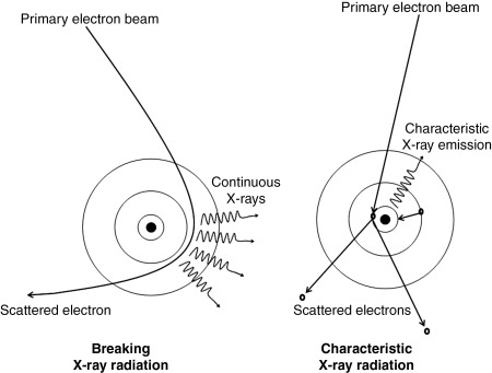 Scanning electron microscopy sciencedirect the principles in forming bremsstrahlung x ray radiation and characteristic x ray radiation goldstein et al 2007 ccuart Gallery