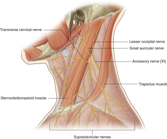 Lesser Occipital Nerve Block - ScienceDirect
