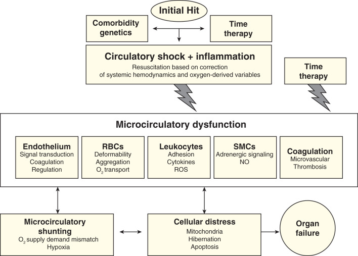 Shock (Circulatory) - an overview | ScienceDirect Topics