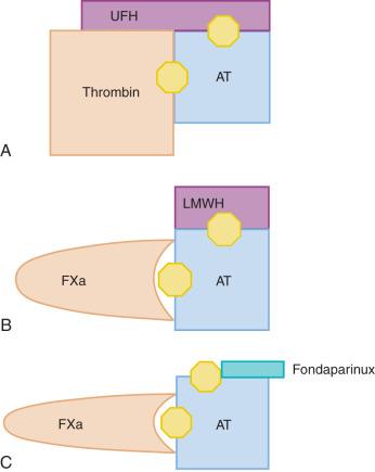 Anticoagulant - an overview   ScienceDirect Topics