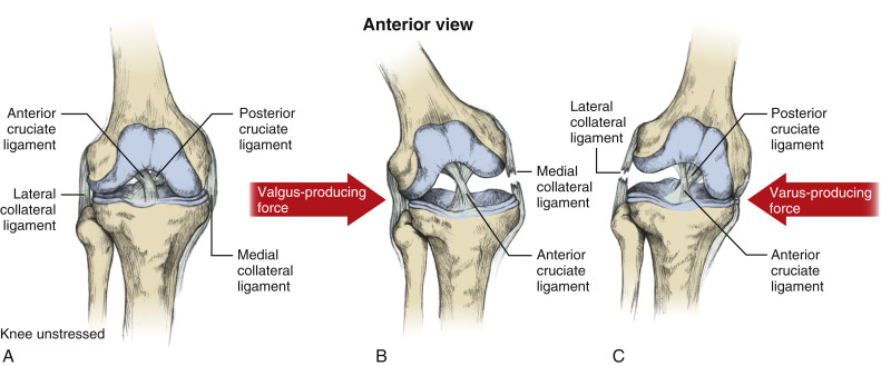 Lateral Collateral Ligament - an overview | ScienceDirect Topics