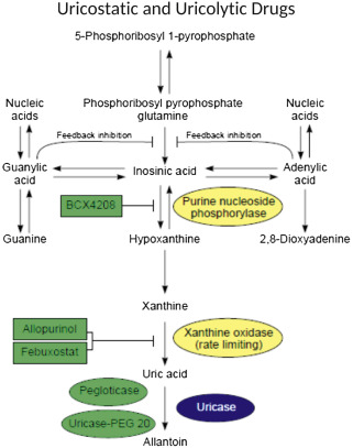 Xanthine Oxidase Inhibitors - an overview | ScienceDirect Topics