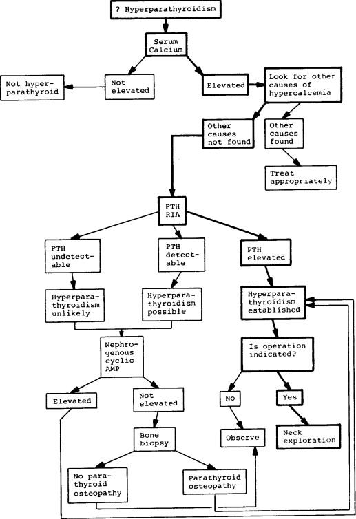 Hr Diagram Activity Answer