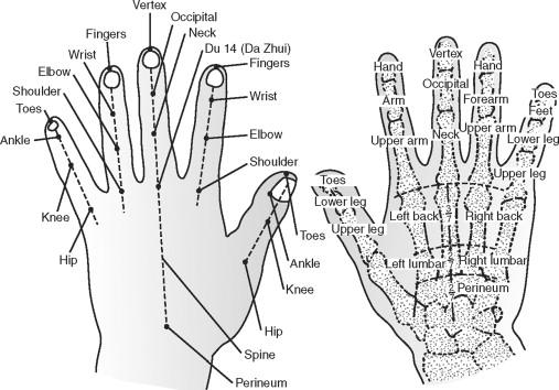 Phalange Bone - an overview   ScienceDirect Topics