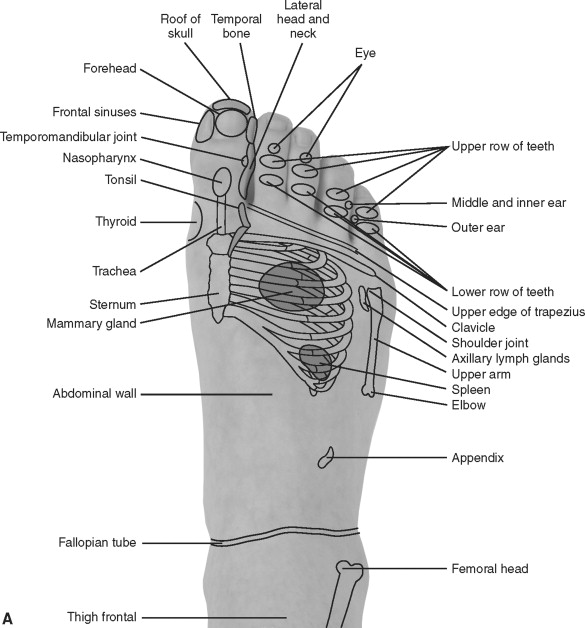 Reflexology - an overview   ScienceDirect Topics