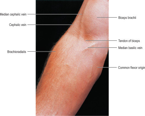 Superficial Vein - an overview | ScienceDirect Topics