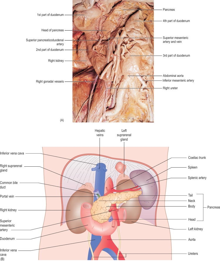 Gastroduodenal Artery An Overview Sciencedirect Topics
