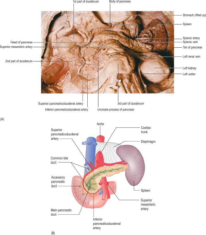 Head Of Pancreas An Overview Sciencedirect Topics