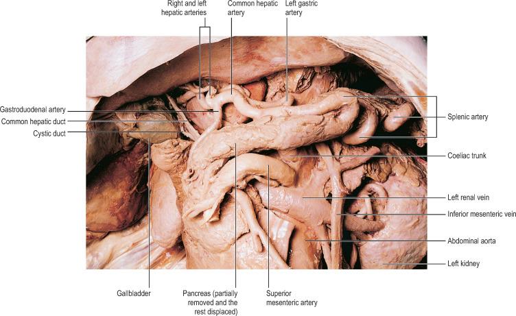Abdominal Aorta An Overview Sciencedirect Topics