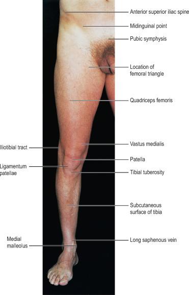 Rectus Femoris Muscle An Overview Sciencedirect Topics