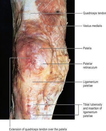 Quadriceps Tendon An Overview Sciencedirect Topics