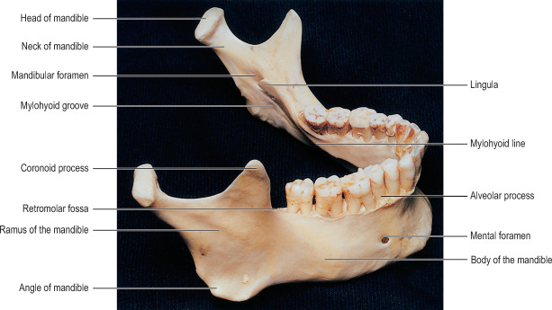 mandible an overview sciencedirect topics