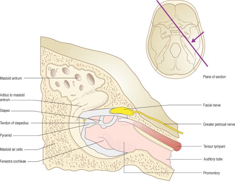 Tympanic Cavity An Overview Sciencedirect Topics